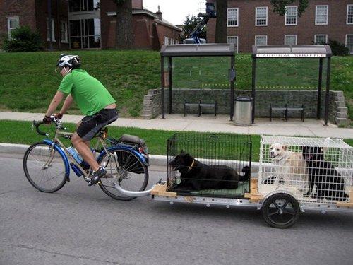 Bike Your Dog To Work